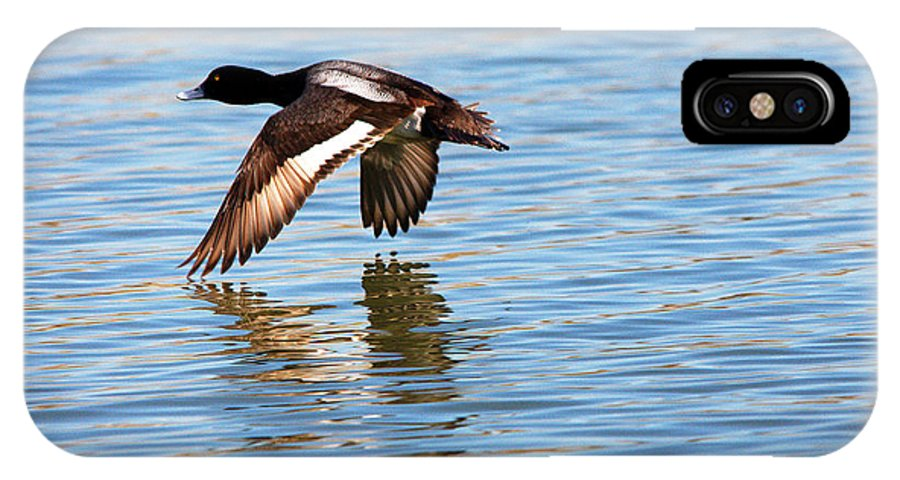 Duck IPhone X Case featuring the photograph Greater Scaup In Flight by Roy Williams
