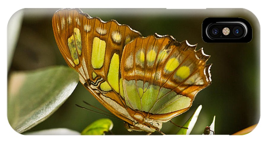 Tropical IPhone X Case featuring the photograph Green and Brown Tropical Butterfly by Douglas Barnett