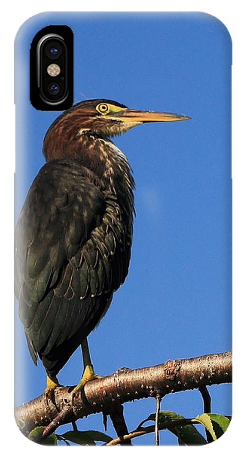Heron IPhone X Case featuring the photograph Green Heron Roosts by Scott Rackers