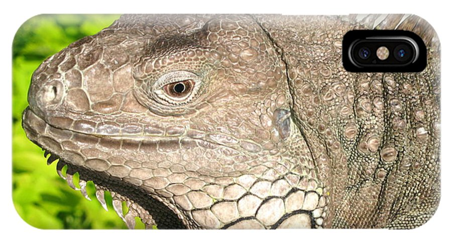 Green Iguana IPhone X Case featuring the photograph Green Iguana Face by Shoal Hollingsworth