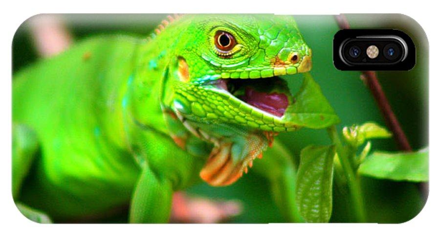 Iguana IPhone X Case featuring the photograph Green Iguana by Kabir Ghafari