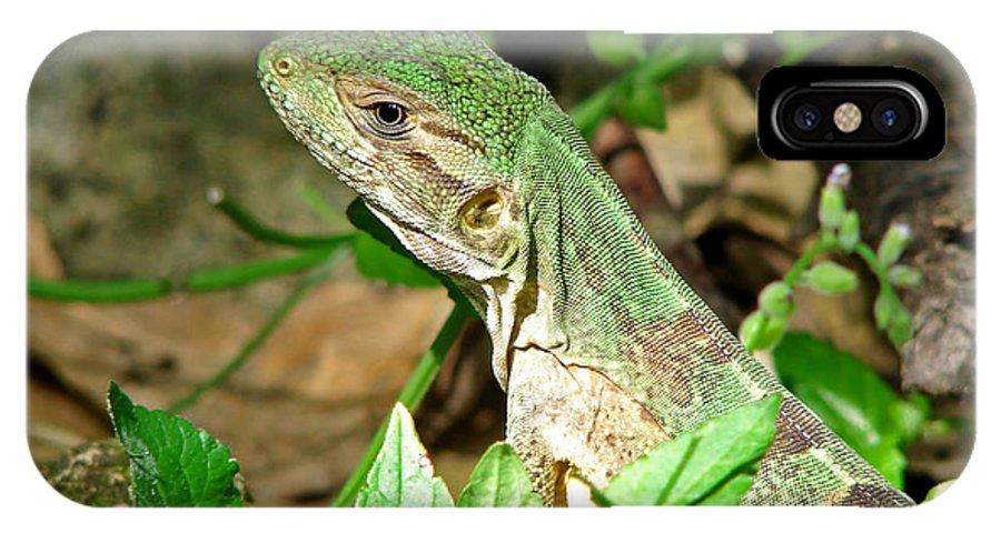 Lizard IPhone X Case featuring the photograph Green Lizard Close-up by Sylvie Bouchard