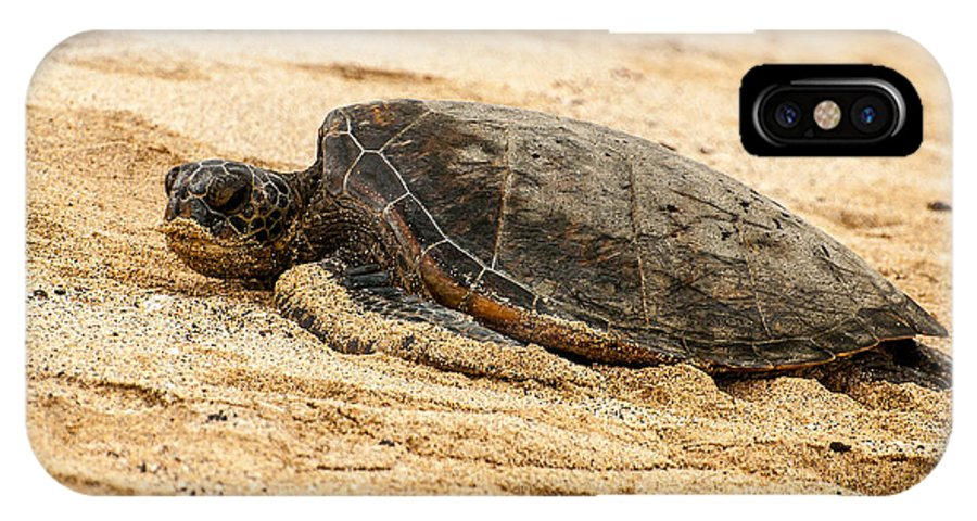 Beach IPhone X Case featuring the photograph Green Turtle 3 by Sabine Edrissi