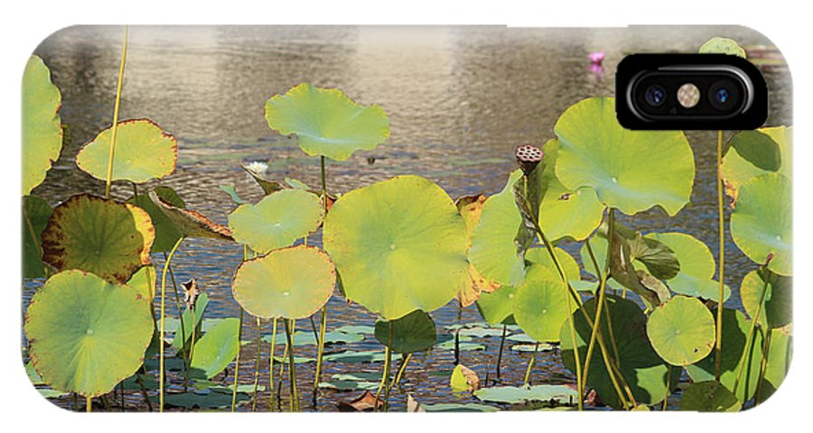 Pond IPhone X Case featuring the photograph Greens On A Pond 3 by Mark Steven Burhart