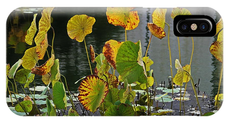 Pond IPhone X Case featuring the photograph Greens On A Pond by Mark Steven Burhart