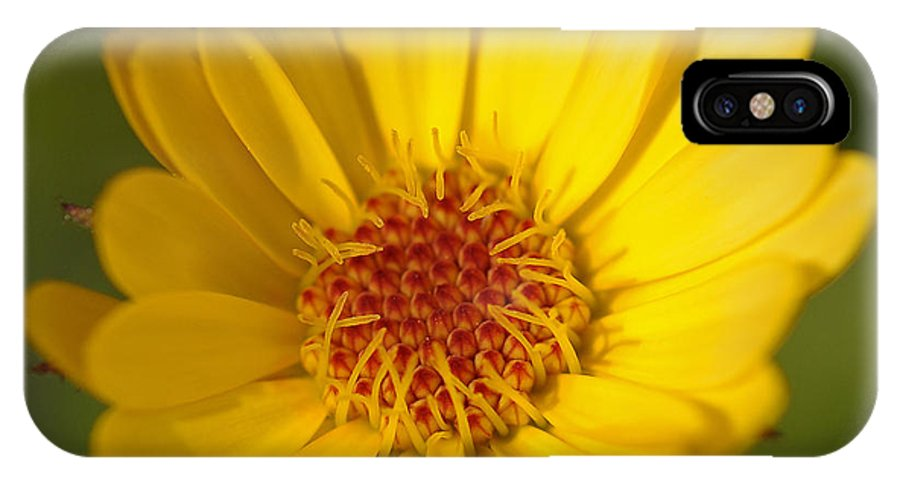 Macro IPhone X Case featuring the photograph Greeting The Morning Sun by Liz Mackney