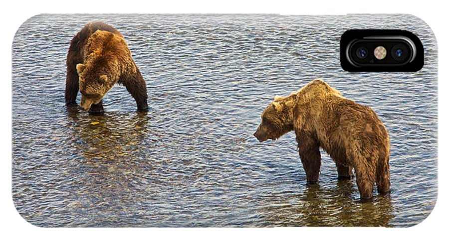 Grizzly Bears Looking For Salmon IPhone X Case featuring the photograph Grizzly Bears Looking For Salmon In Moraine River In Katmai Np-ak by Ruth Hager