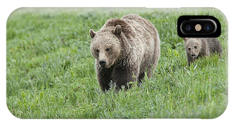 Bears IPhone X Case featuring the photograph Grizzly Family On Dunraven by Bob Dowling