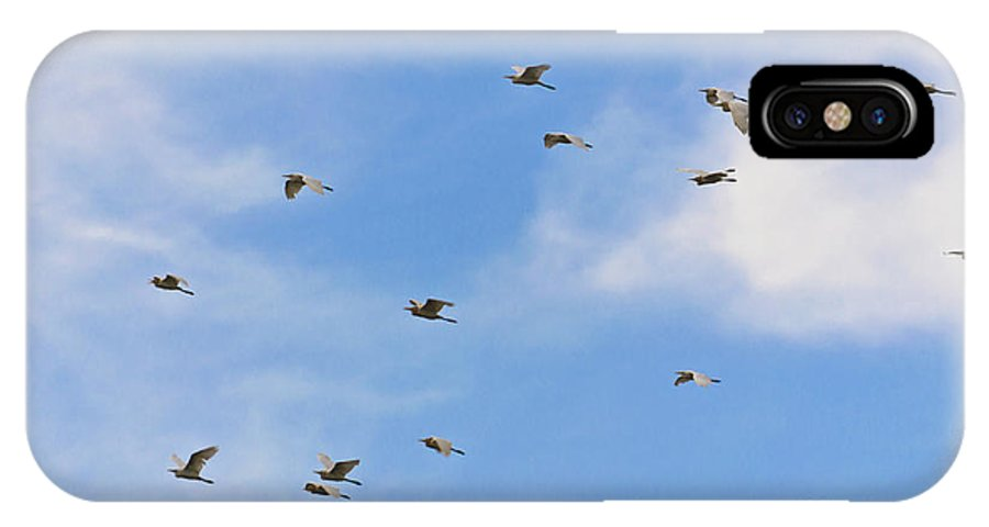 Casmerodius Albus IPhone X Case featuring the photograph Group Of Egrets Flying by Image World