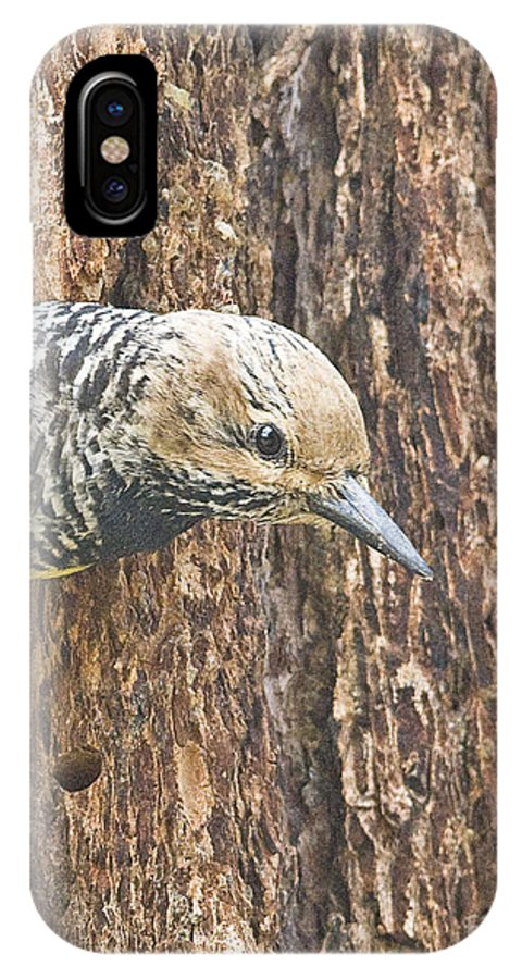 Nature IPhone X Case featuring the photograph Guarding The Nest by Bob Dowling