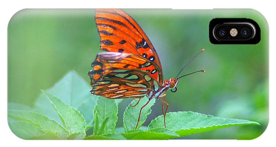 Butterfly IPhone X Case featuring the photograph Gulf Fritillary 2 by Nancy L Marshall