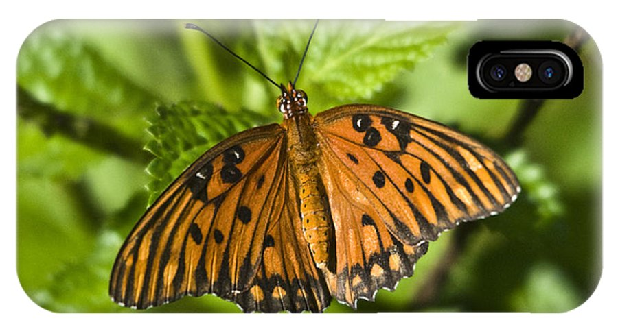 Gulf Fritillary IPhone X Case featuring the photograph Gulf Fritillary by John Greco