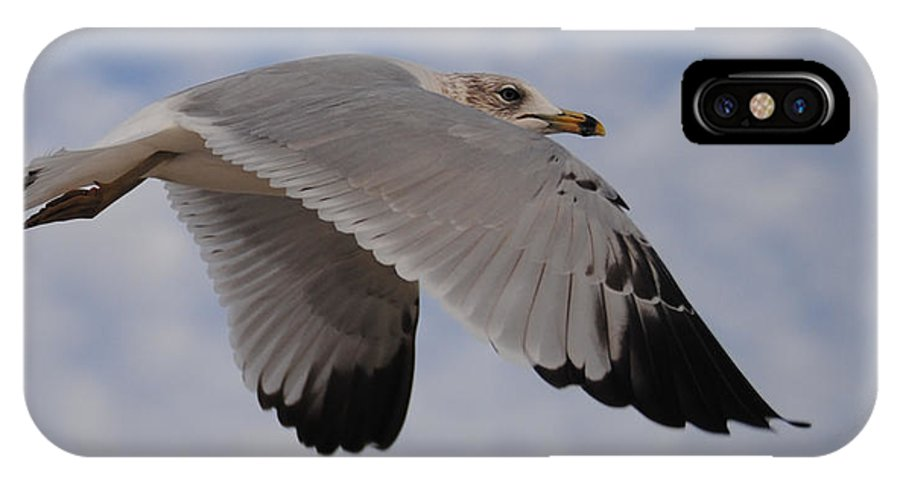 Seagull IPhone X Case featuring the photograph Gull In Flight by Jon Cody