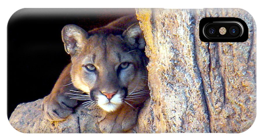Cougar IPhone X / XS Case featuring the photograph Guardian Of The Cliff by Jim Barbour