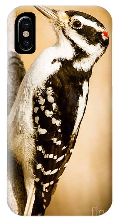 IPhone X Case featuring the photograph Hairy Woodpecker by Cheryl Baxter