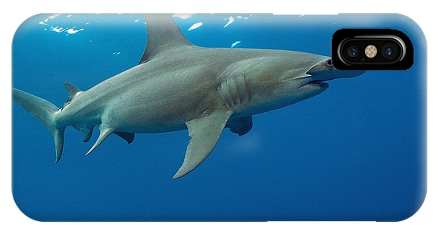 Great Hammerhead Shark IPhone X Case featuring the photograph Hammer by Aaron Whittemore
