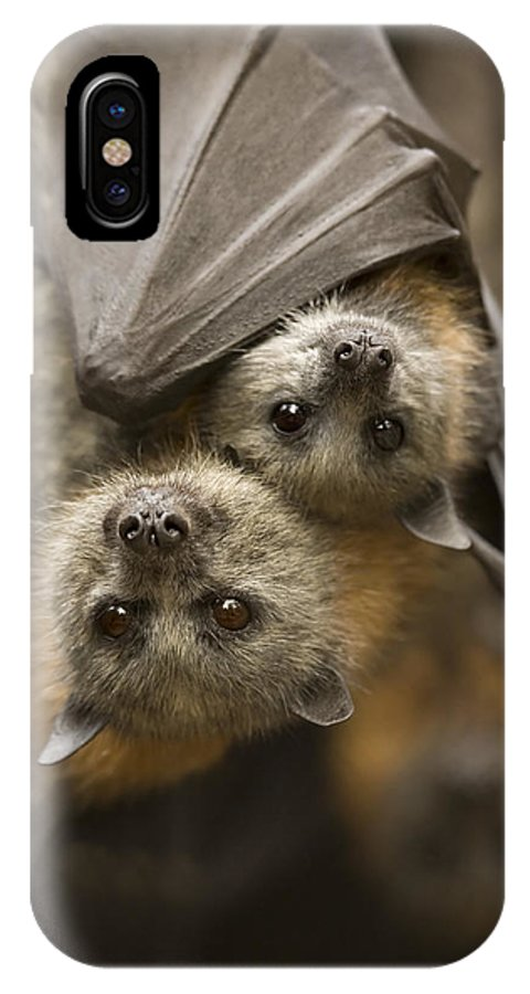 Bats IPhone Case featuring the photograph Hang In There by Mike Dawson