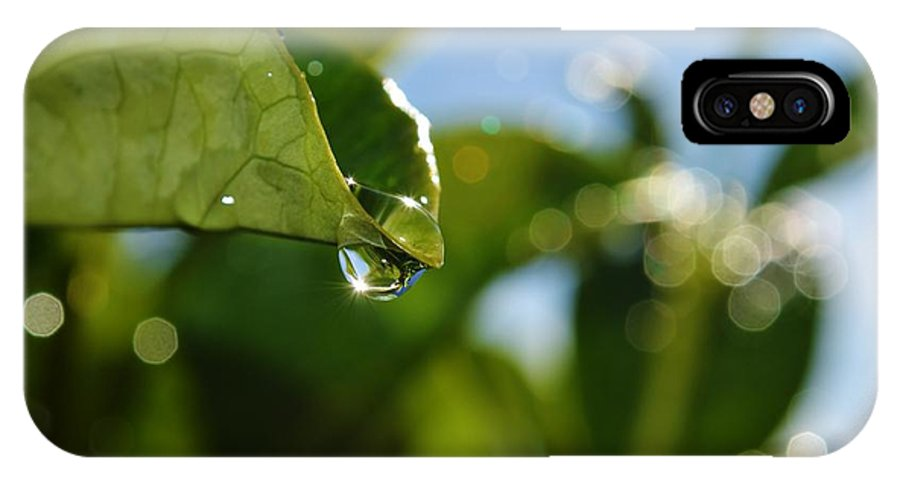 Close Up; Raindrops; Green; Leaf; Reflection; Nature; Plant; Garden; Water; Wet; Droplets; Background; Decorative; Clear; Wallpaper; Desktop; Decor; Detail; IPhone X Case featuring the photograph Hanging On... by Werner Lehmann