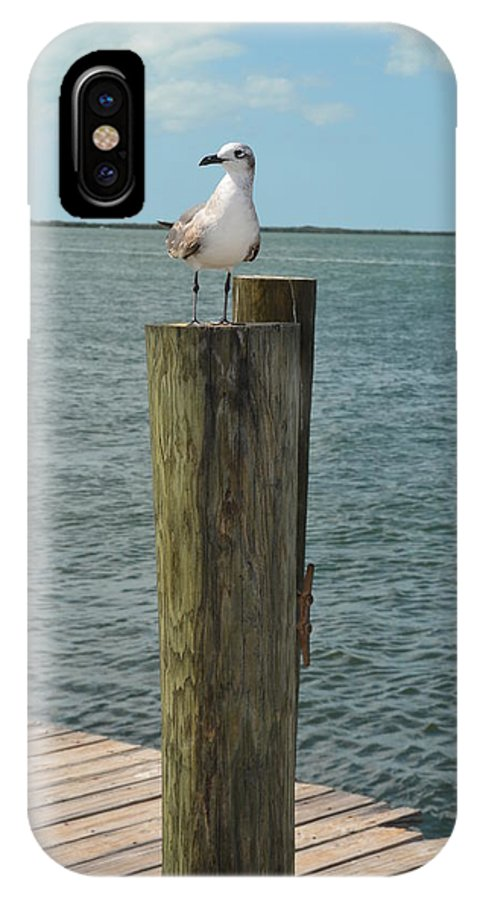 Bird IPhone X Case featuring the photograph Hanging Out by Jill Kelley