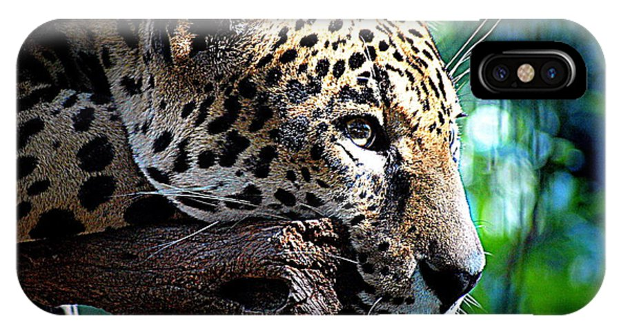 Jaguar IPhone X Case featuring the photograph Hanging Out by Travis Tapley