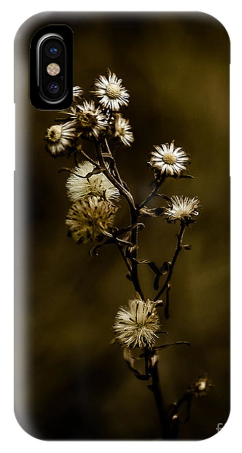 Happily Ever Aster IPhone X Case featuring the photograph Happily Ever Aster by Mitch Shindelbower