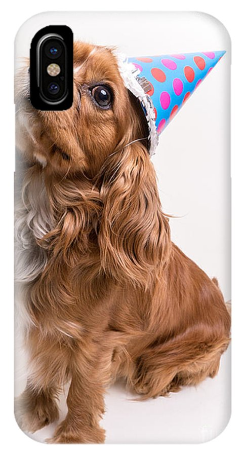 Dog IPhone X Case featuring the photograph Happy Birthday Dog by Edward Fielding