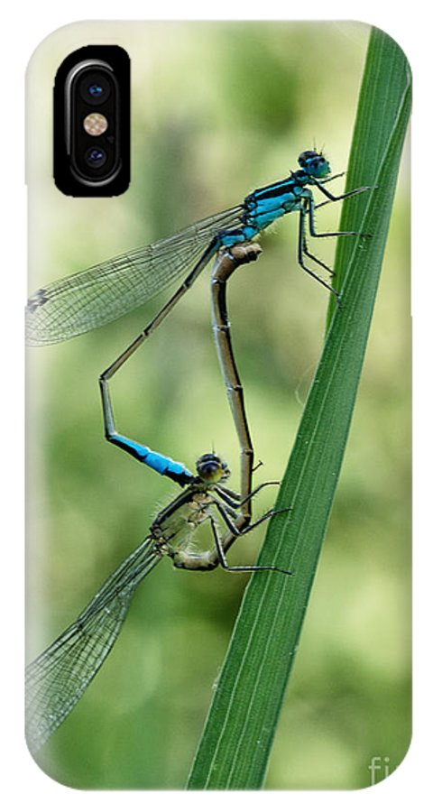 Mating Damselflies IPhone X Case featuring the photograph Happy Couple by Brothers Beerens