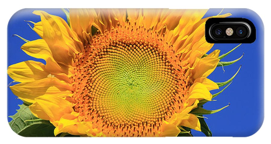 Sunflower IPhone X Case featuring the photograph Happy Face by Dana Kern