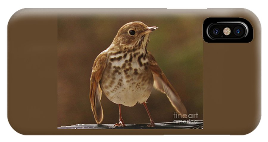 Bird Birds IPhone X Case featuring the photograph Happy Hermit Thrush by Earl Williams Jr