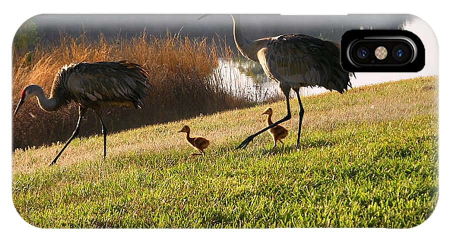 Sandhill Cranes IPhone X Case featuring the photograph Happy Sandhill Crane Family - Original by Carol Groenen