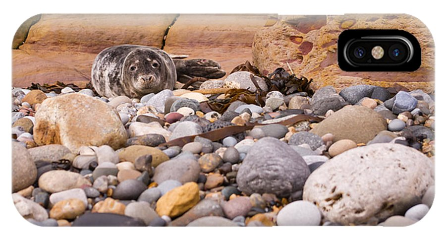 Animal IPhone X Case featuring the photograph Harbour Seal On Pebble Beach by David Head