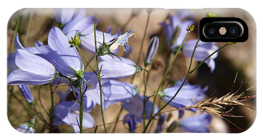 Harbell IPhone X Case featuring the photograph Harebell by Michaela Perryman