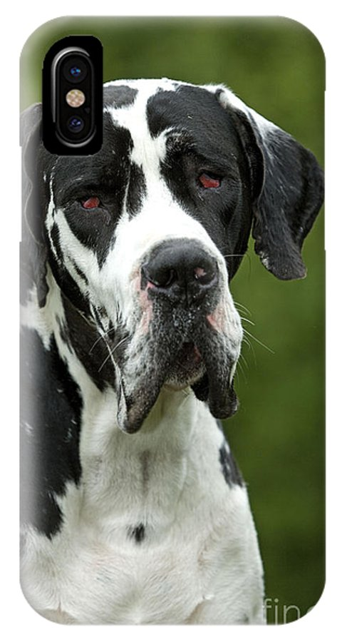 Great Dane IPhone X / XS Case featuring the photograph Harlequin Great Dane by Jean-Michel Labat