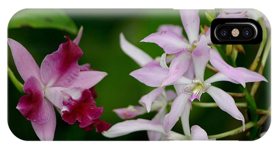 Orchids IPhone X Case featuring the photograph Harmony by Living Color Photography Lorraine Lynch