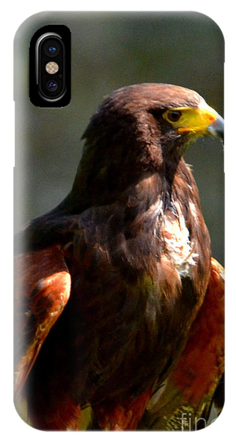 Harris Hawk IPhone X Case featuring the digital art Harris Hawk In Thought by Pravine Chester
