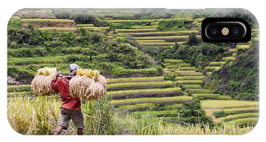 Rice IPhone X Case featuring the photograph Harvest Season In Rice Field by Tuimages