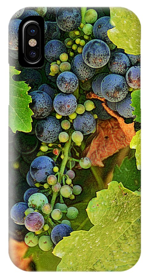 Vineyards IPhone X Case featuring the photograph Harvest Time 2 by Karen W Meyer