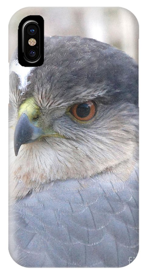 Hawk Eye IPhone X Case featuring the photograph Hawk Eye 13528-3 by Robert E Alter Reflections of Infinity