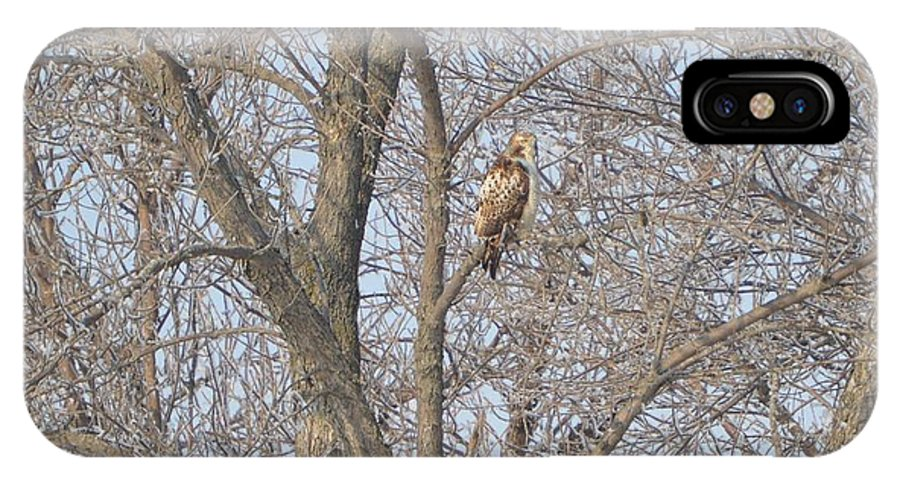 Hawk IPhone X Case featuring the photograph Hawkish by Bonfire Photography