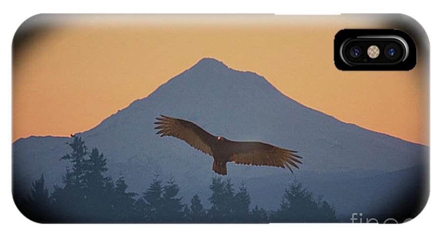 Wildlife IPhone X Case featuring the photograph Hawks View by Steven Baier