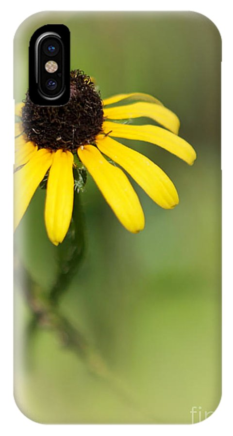 Art IPhone X Case featuring the photograph He Loves Me by Sabrina L Ryan