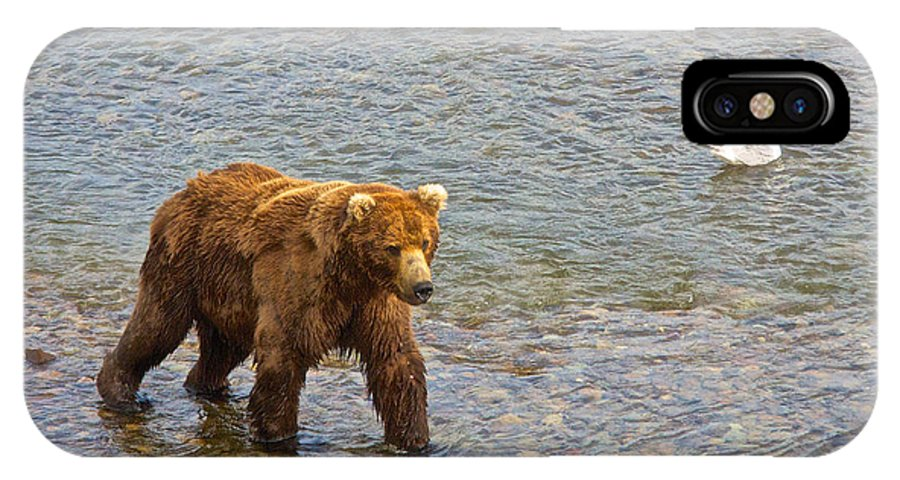 Head Grizzly Bear IPhone X Case featuring the photograph Head Grizzly Bear And Sea Gull In Moraine River In Katmai Np-ak by Ruth Hager