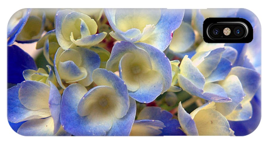 Floral IPhone X Case featuring the photograph Heavenly Blues by RC DeWinter