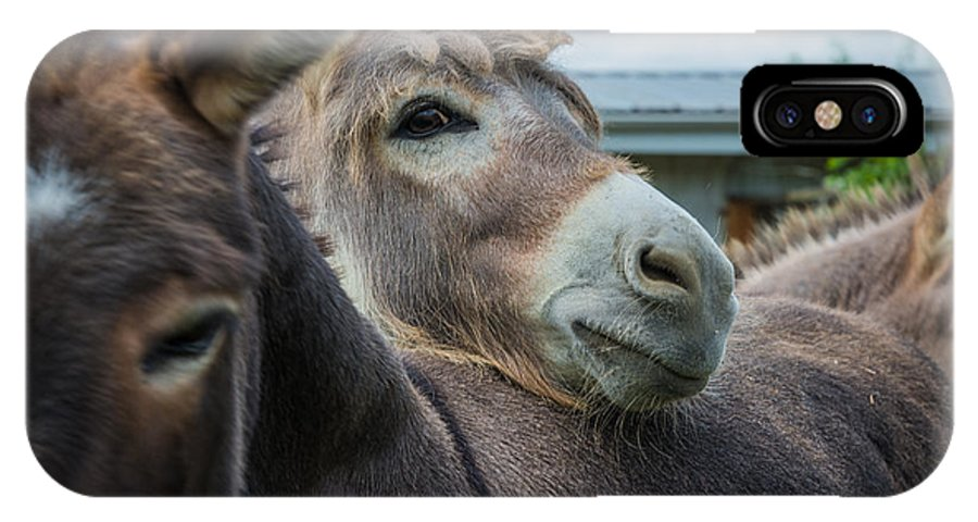 Pennsylvania IPhone X Case featuring the photograph Hello Donkey by Kristopher Schoenleber