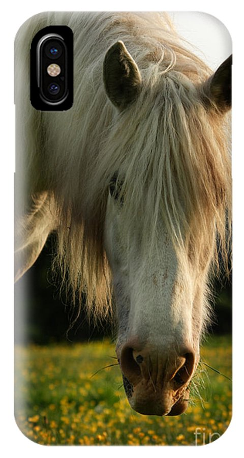 Grey Horse IPhone X Case featuring the photograph Hello Mate by Angel Ciesniarska