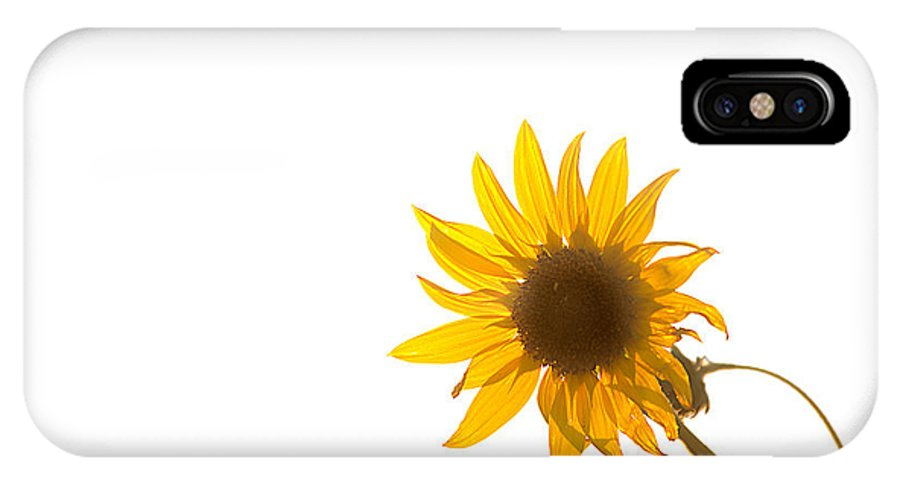 California IPhone X Case featuring the photograph Hello Yellow by Peter Tellone