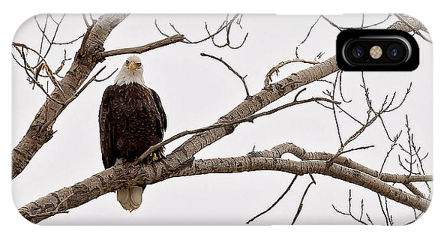 Eagle IPhone X Case featuring the photograph Her Majesty by Deb Buchanan