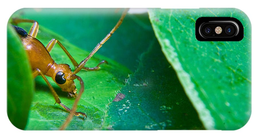 Beetle IPhone X Case featuring the photograph Here's Looking At You by Douglas Barnett