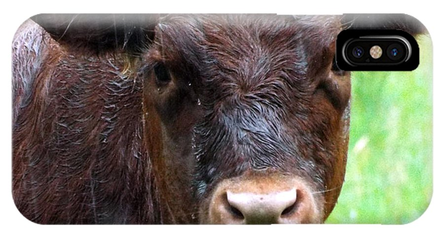 Cow IPhone X Case featuring the photograph Here's Looking At You by Rebecca Malo