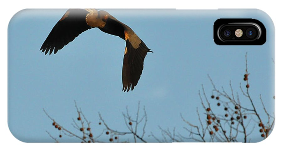 Great Blue Heron IPhone X Case featuring the photograph Heron 244a by David McDowell